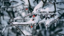 The Complete History of Snow, Ice, and Christmas